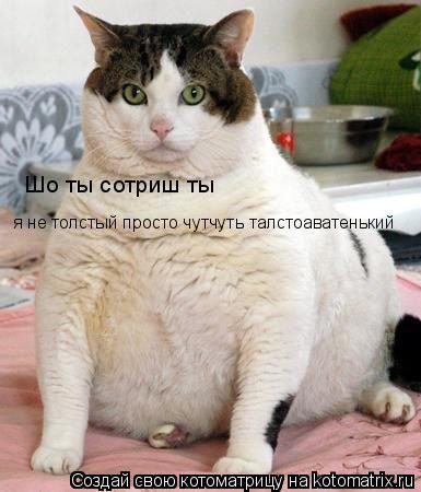 Котоматрица: Шо ты сотриш ты  я не толстый просто чутчуть талстоаватенький