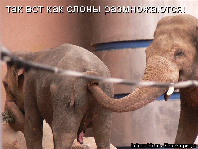 Котоматрица: так вот как слоны размножаются!