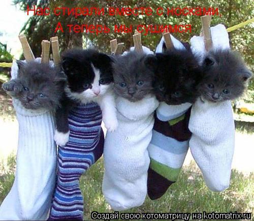 Котоматрица: Нас стирали вместе с носками, А теперь мы сушимся