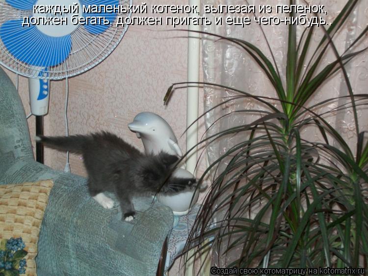 Котоматрица: каждый маленький котенок, вылезая из пеленок, должен бегать, должен пригать и еще чего-нибудь..