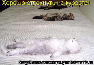 Котоматрица: Хорошо отдохнуть на курорте!