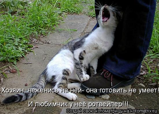 Котоматрица: Хозяин, неженись на ней- она готовить не умеет!!! И любимчик у неё ротвейлер!!!