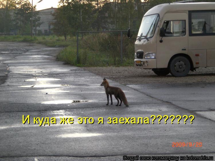 Котоматрица: И куда же это я заехала???????