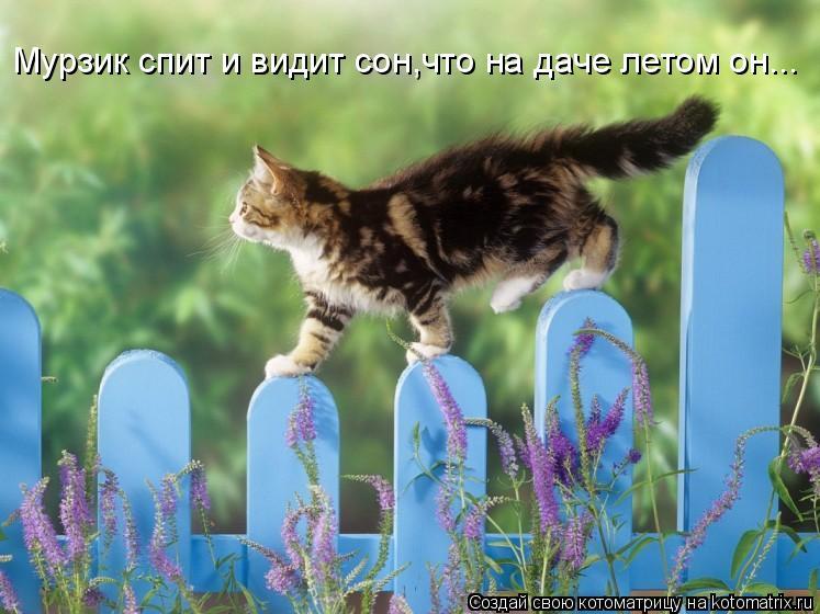 Котоматрица: Мурзик спит и видит сон,что на даче летом он...