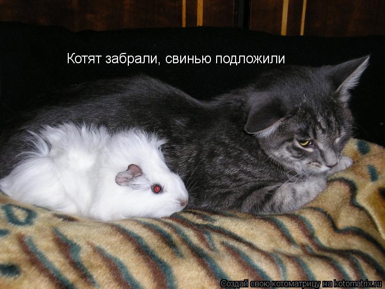 Котоматрица: Котят забрали, свинью подложили