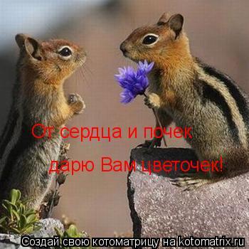 Котоматрица: От сердца и почек дарю Вам цветочек!