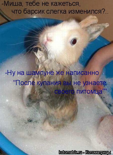 """Котоматрица: что барсик слегка изменился?.. -Ну на шампуне же написанно -Миша, тебе не кажеться, """"После купания вы не узнаете своего питомца"""""""""""