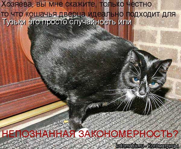 Котоматрица: Хозяева, вы мне скажите, только честно то что кошачья дверца идеально подходит для  Тузьки это просто случайность или НЕПОЗНАННАЯ ЗАКОНОМЕ