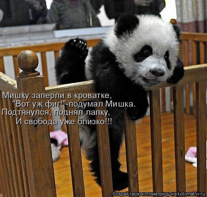 """Котоматрица: Мишку заперли в кроватке, """"Вот уж фиг!""""-подумал Мишка. Подтянулся, поднял лапку, И свобода уже близко!!!"""