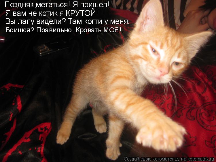 Котоматрица: Поздняк метаться! Я пришел! Я вам не котик я КРУТОЙ! Вы лапу видели? Там когти у меня. Боишся? Правильно. Кровать МОЯ!.