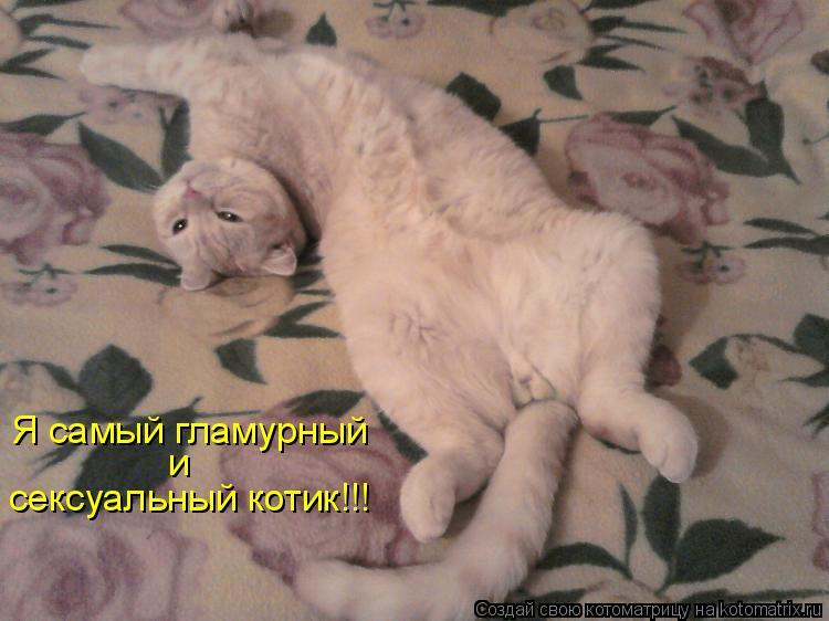 Котоматрица: Я самый гламурный и сексуальный котик!!!