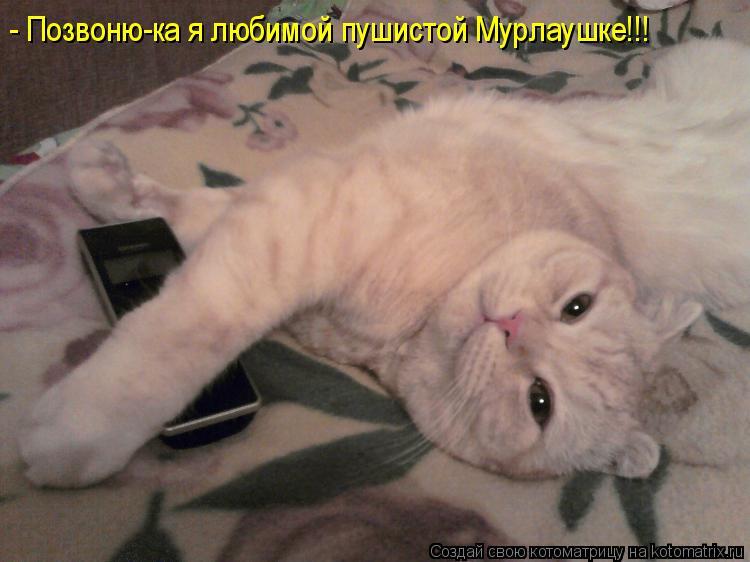 Котоматрица: - Позвоню-ка я любимой пушистой Мурлаушке!!!