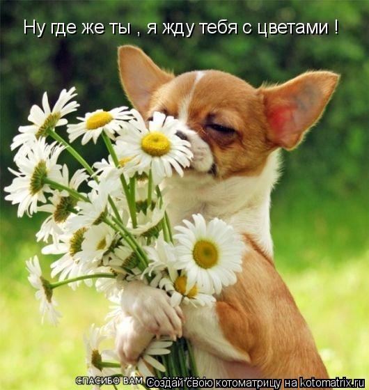 Котоматрица: Ну где же ты , я жду тебя с цветами !