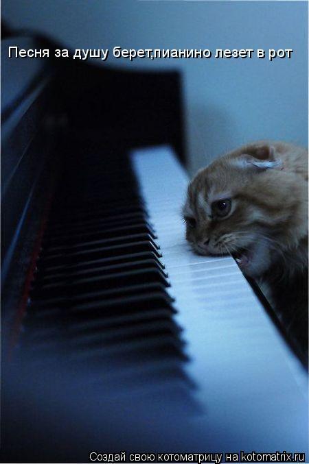 Котоматрица: Песня за душу берет,пианино лезет в рот