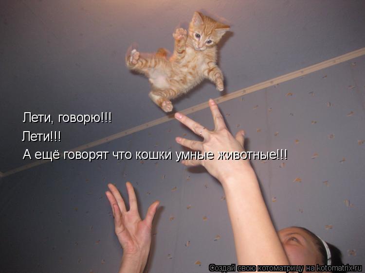 Котоматрица: Лети, говорю!!! Лети!!! Лети!!! А ещё говорят что кошки умные животные!!! А ещё говорят что кошки умные животные!!!
