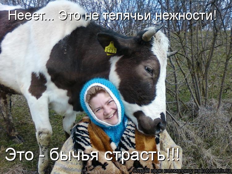 Котоматрица: Нееет... Это не телячьи нежности! Это - бычья страсть!!!