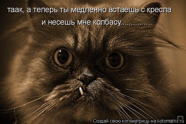Котоматрица: таак, а теперь ты медленно встаешь с кресла  и несешь мне колбасу...............