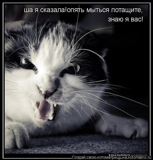 Котоматрица: ша я сказала!опять мыться потащите,знаю я вас,рруки убрали! ша я сказала!опять мыться потащите,  знаю я вас!