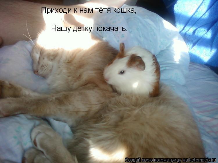 Котоматрица: Приходи к нам тётя кошка, Нашу детку покачать.