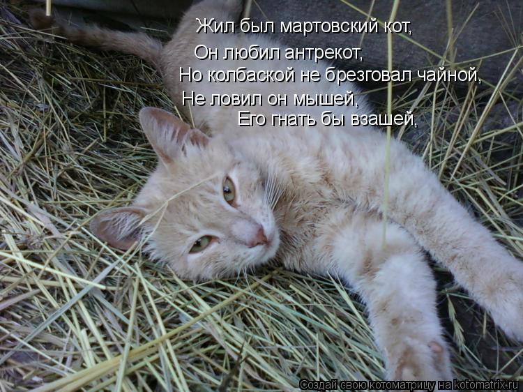 Котоматрица: Жил был мартовский кот, Он любил антрекот, Но колбаской не брезговал чайной, Не ловил он мышей, Его гнать бы взашей,