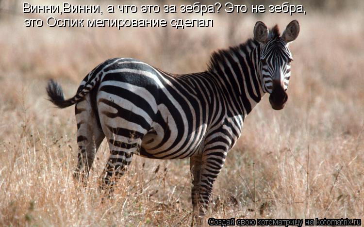 Котоматрица: Винни,Винни, а что это за зебра? Это не зебра,  это Ослик мелирование сделал