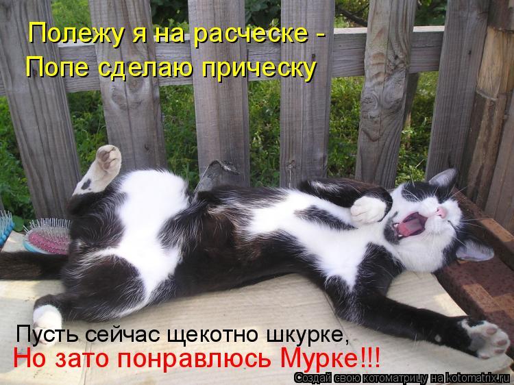 Котоматрица: Полежу я на расческе -  Попе сделаю прическу Пусть сейчас щекотно шкурке, Но зато понравлюсь Мурке!!!