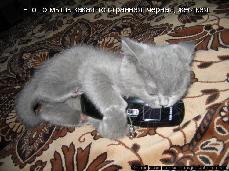 Котоматрица: Что-то мышь какая-то странная: черная, жесткая.