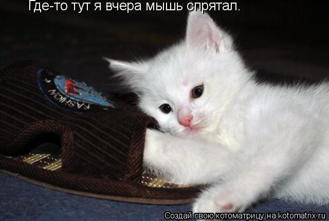 Котоматрица: Где-то тут я вчера мышь спрятал.