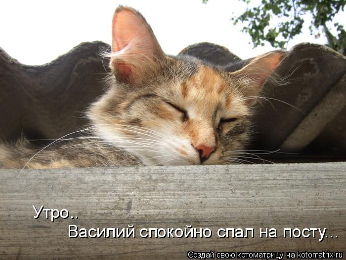 Котоматрица: Утро.. Василий спокойно спал на посту...