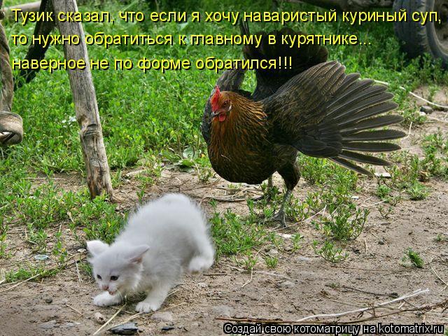 Котоматрица: Тузик сказал, что если я хочу наваристый куриный суп, то нужно обратиться к главному в курятнике... наверное не по форме обратился!!!