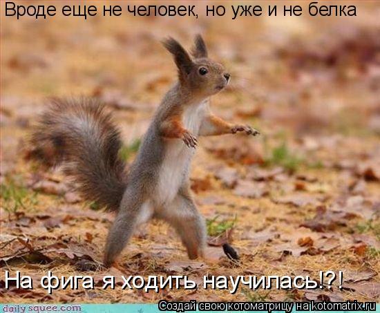 Котоматрица: Вроде еще не человек, но уже и не белка На фига я ходить научилась!?!