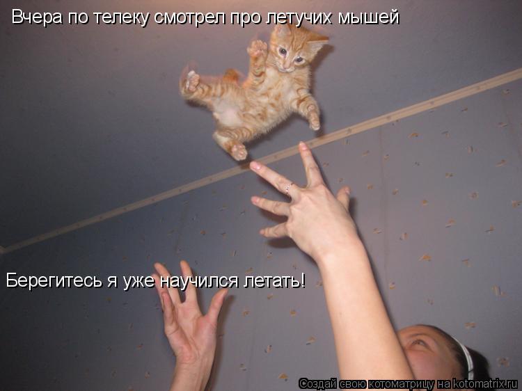 Котоматрица: Вчера по телеку смотрел про летучих мышей Берегитесь я уже научился летать!