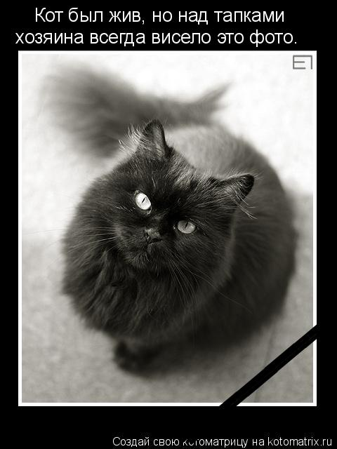 Котоматрица: ____________________ _________________ _________________ Кот был жив, но над тапками  хозяина всегда висело это фото.