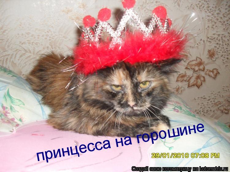 Котоматрица: принцесса на горошине