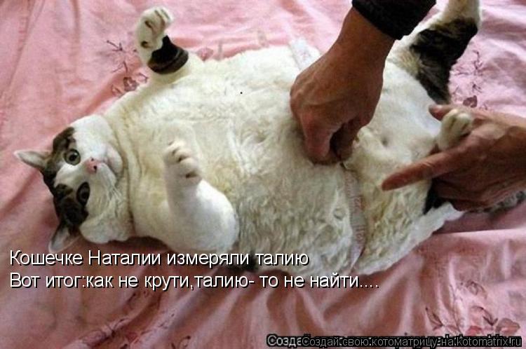 Котоматрица: Кошечке Наталии измеряли талию Вот итог:как не крути,талию- то не найти....