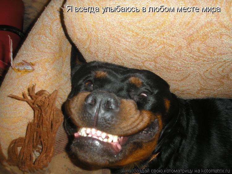 Котоматрица: Я всегда улыбаюсь в любом месте мира