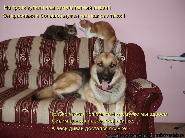 Котоматрица: На троих купили нам замечателный диван!! Он красивый и большой,нужен нам как раз такой! Только что-то не поймем-почему же мы вдвоем Сидим вве