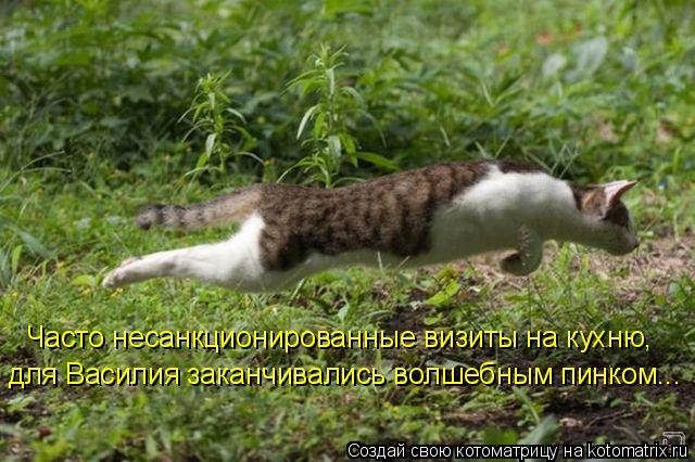 Котоматрица: Часто несанкционированные визиты на кухню, для Василия заканчивались волшебным пинком...
