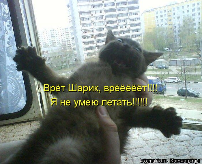 Котоматрица: Врёт Шарик, врёёёёёт!!!! Я не умею летать!!!!!!