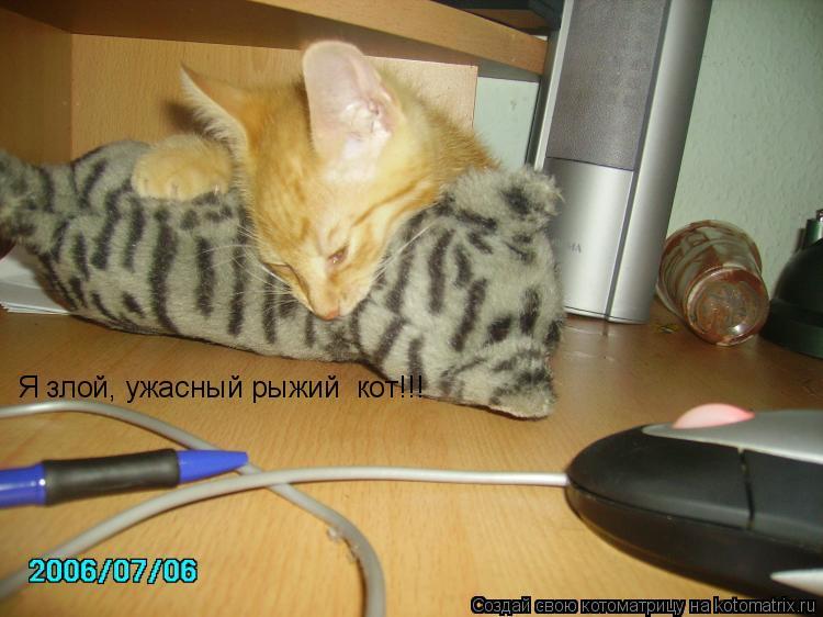 Котоматрица: Я злой, ужасный рыжий  кот!!!