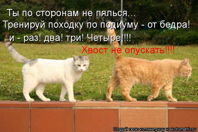 Котоматрица: Ты по сторонам не пялься... Тренируй походку по подиуму - от бедра! и - раз! два! три! Четыре!!!! Хвост не опускать!!!!