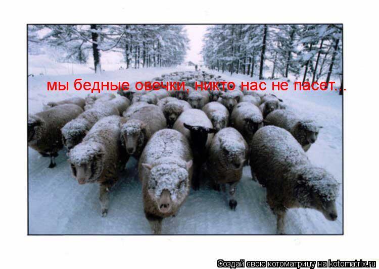 Котоматрица: мы бедные овечки, никто нас не пасет...