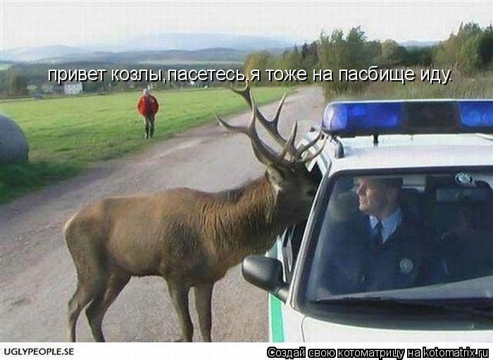 Котоматрица: привет козлы,пасетесь,я тоже на пасбище иду.