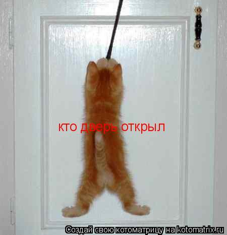 Котоматрица: кто дверь открыл