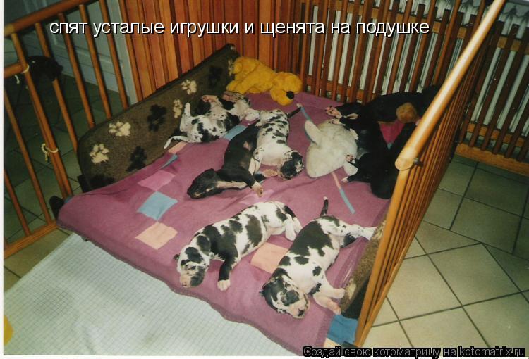 Котоматрица: спят усталые игрушки и щенята на подушке