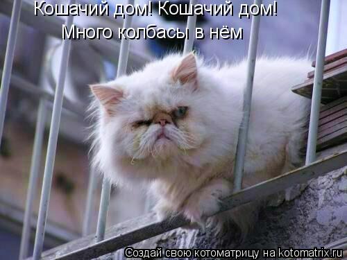 Котоматрица: Кошачий дом! Кошачий дом! Много колбасы в нём