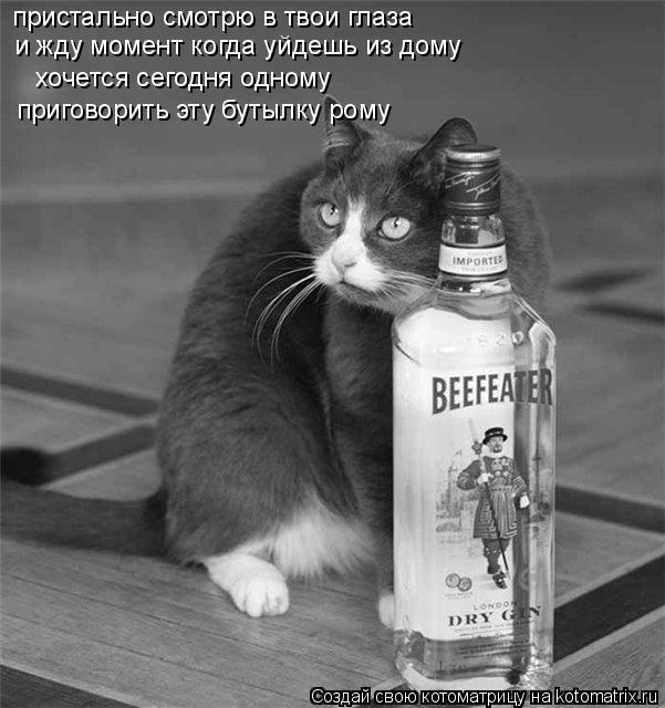 Котоматрица: пристально смотрю в твои глаза   и жду момент когда уйдешь из дому  хочется сегодня одному   приговорить эту бутылку рому