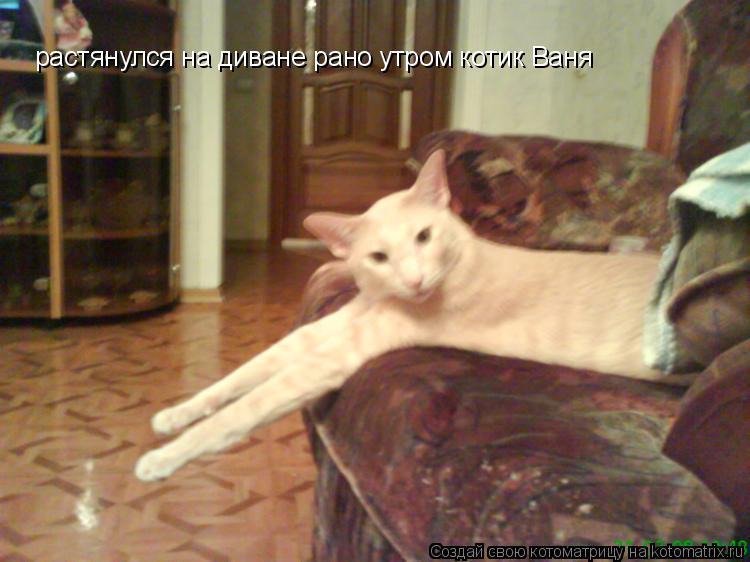 Котоматрица: растянулся на диване рано утром котик Ваня