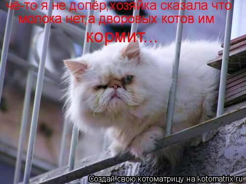 Котоматрица: чё-то я не допёр,хозяйка сказала что молока нет,а дворовых котов им кормит... молока нет,а дворовых котов им