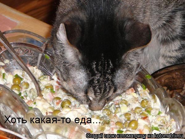 Котоматрица: Хоть какая-то еда...